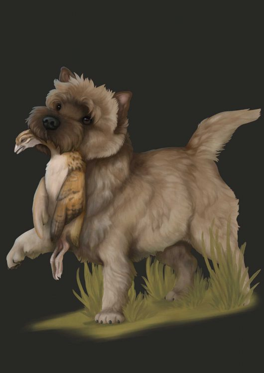 Therengar Terrier
